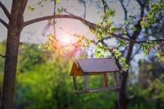 Фидер для птиц на дереве Стоковые Фото