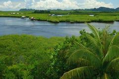 Филиппинская природа - мангровы стоковая фотография