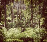 Фильтрованный лес папоротника Стоковое фото RF