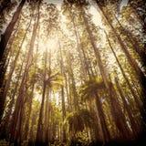 Фильтрованный лес папоротника Стоковая Фотография RF