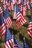 флаги поля Стоковое Изображение
