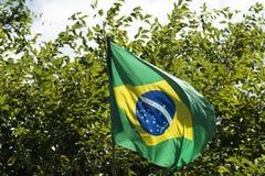 Флаг Бразилии в ветре Стоковые Фото