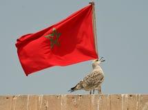 флаг Марокко Стоковое Изображение