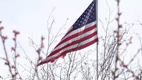 Флаг над цветенями дерева весны развевая в ветре видеоматериал