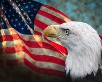 Флаг с облыселым орлом Стоковая Фотография