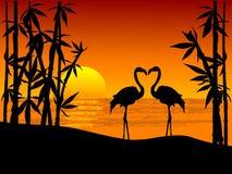 фламингоы 2 Стоковые Изображения
