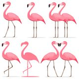 Фламинго, комплект розовых фламинго Стоковые Фотографии RF