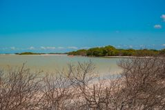 Фламинго на запасе биосферы Рио Lagartos, Юкатане, Мексике стоковое фото
