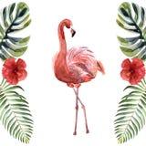 Фламинго пинка акварели изолированный на белой предпосылке стоковые изображения rf