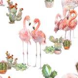 2 фламинго с кактусом на белой предпосылке Картина акварели нарисованная рукой безшовная Rastra Стиль Boho современный для иллюстрация штока
