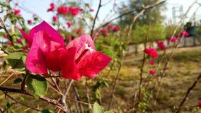 Флора в пустыне стоковые фотографии rf