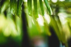 флора, дерево, лист, естественные, цвет, красный цвет, зеленый цвет, цветок, флористический, природа, предпосылка, сад, красота,  Стоковые Изображения RF