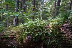 флора и деревья леса в одичалом настроении окружающей среды в лете Стоковые Фотографии RF