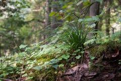 флора и деревья леса в одичалом настроении окружающей среды в лете Стоковое Фото