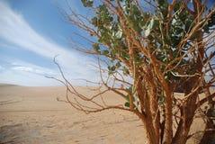 флора пустыни Стоковые Фотографии RF
