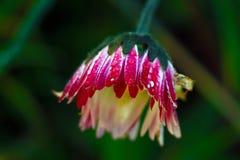 Флора среднеземноморского salentina пятна стоковые изображения rf