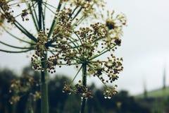 флора стоковая фотография