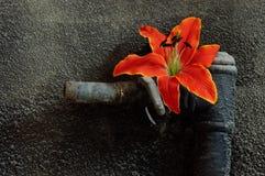 флора Стоковые Фотографии RF