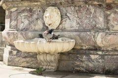 Флоренс, Италия - 24-ое апреля 2018: 2 голубя охлаждая в фонтане около базилики святого креста Стоковые Изображения RF