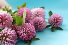 Флористическая абстрактная предпосылка с цветками клевера Стоковое фото RF
