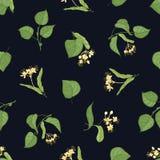 Флористическая безшовная картина с листьями и цветорасположениями липы на черной предпосылке Фон с лекарственным растением стоковые фотографии rf