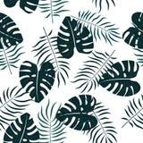 Флористическая безшовная картина с листьями предпосылка тропическая Стоковые Изображения RF