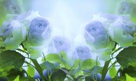 Флористическая бело-голубая красивая предпосылка Нежный букет роз с зеленым цветом выходит на стержень после дождя с падениями иллюстрация штока