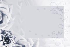 Флористическая бело-черная предпосылка Цветок белой розы Предпосылка для открытки E иллюстрация вектора