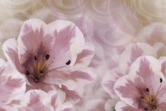 Флористическая винтажная фиолетов-белая красивая предпосылка тюльпаны цветка повилики состава предпосылки белые Поздравительная о Стоковое Изображение RF