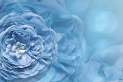 Флористическая голубая красивая предпосылка тюльпаны цветка повилики состава предпосылки белые Поздравительная открытка от бело-г Стоковые Фотографии RF