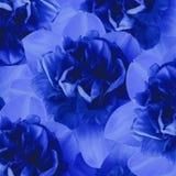 Флористическая голубая предпосылка daffodils тюльпаны цветка повилики состава предпосылки белые Конец-вверх Стоковая Фотография