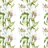 флористическая картина безшовная Лилии акварели белые, рука нарисованная ботаническая иллюстрация цветков Стоковое Изображение RF