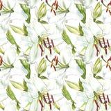 флористическая картина безшовная Лилии акварели белые, рука нарисованная ботаническая иллюстрация цветков Стоковые Фотографии RF