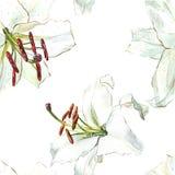 флористическая картина безшовная Лилии акварели белые, рука нарисованная ботаническая иллюстрация цветков Стоковое фото RF