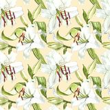 флористическая картина безшовная Лилии акварели белые, рука нарисованная ботаническая иллюстрация цветков Стоковые Изображения RF