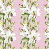 флористическая картина безшовная Лилии акварели белые, рука нарисованная ботаническая иллюстрация цветков Стоковая Фотография