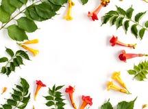 Флористическая картина рамки при листья, бутоны и цветки изолированные на w Стоковое Изображение RF