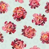 Флористическая картина цветка абстрактных роз, пионов цветет с шариками на белой предпосылке Стоковые Изображения