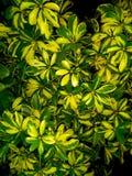 флористическая картина цветков безшовная стоковые изображения