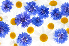 флористическая картина Стоковые Фотографии RF