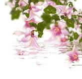 Флористическая конструкция Стоковое Фото
