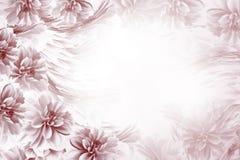 Флористическая коричнев-белая красивая предпосылка Состав георгинов цветков сине-белых Открытка на праздник Природа Стоковое фото RF
