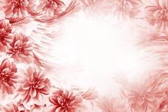 Флористическая красно-белая красивая предпосылка Состав георгинов цветков сине-белых Открытка на праздник Природа Стоковая Фотография RF