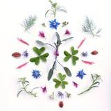 Флористическая мандала - oxalis/lsage стоковые фото