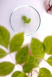 флористическая наука Стоковые Фото
