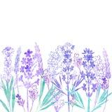 Флористическая предпосылка вектора с цветками лаванды и место для te бесплатная иллюстрация