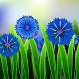 Флористическая предпосылка с космосом для cornflower сини шаблона текста, карточки или приглашения Стоковые Изображения