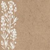 Флористическая предпосылка с цветками лаванды и место для текста Иллюстрация вектора на бумаге kraft Приглашение, поздравительная бесплатная иллюстрация
