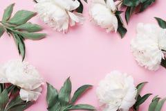 Флористическая рамка белых цветков пиона на розовом пастельном взгляде столешницы и плоском стиле положения Цвет лета моды Стоковое Изображение