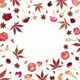 Флористическая рамка листьев красного цвета и высушенных роз на белой предпосылке Плоское положение, взгляд сверху Стоковая Фотография